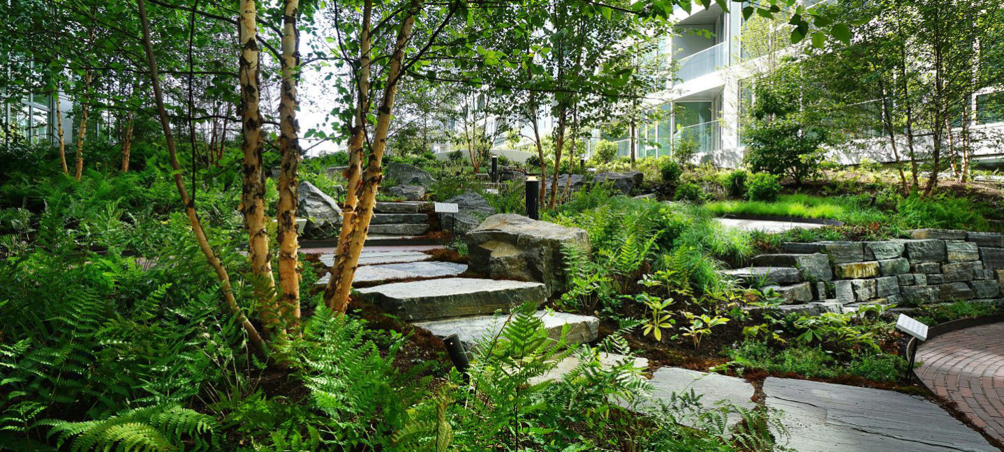 new-landscaping-ideas