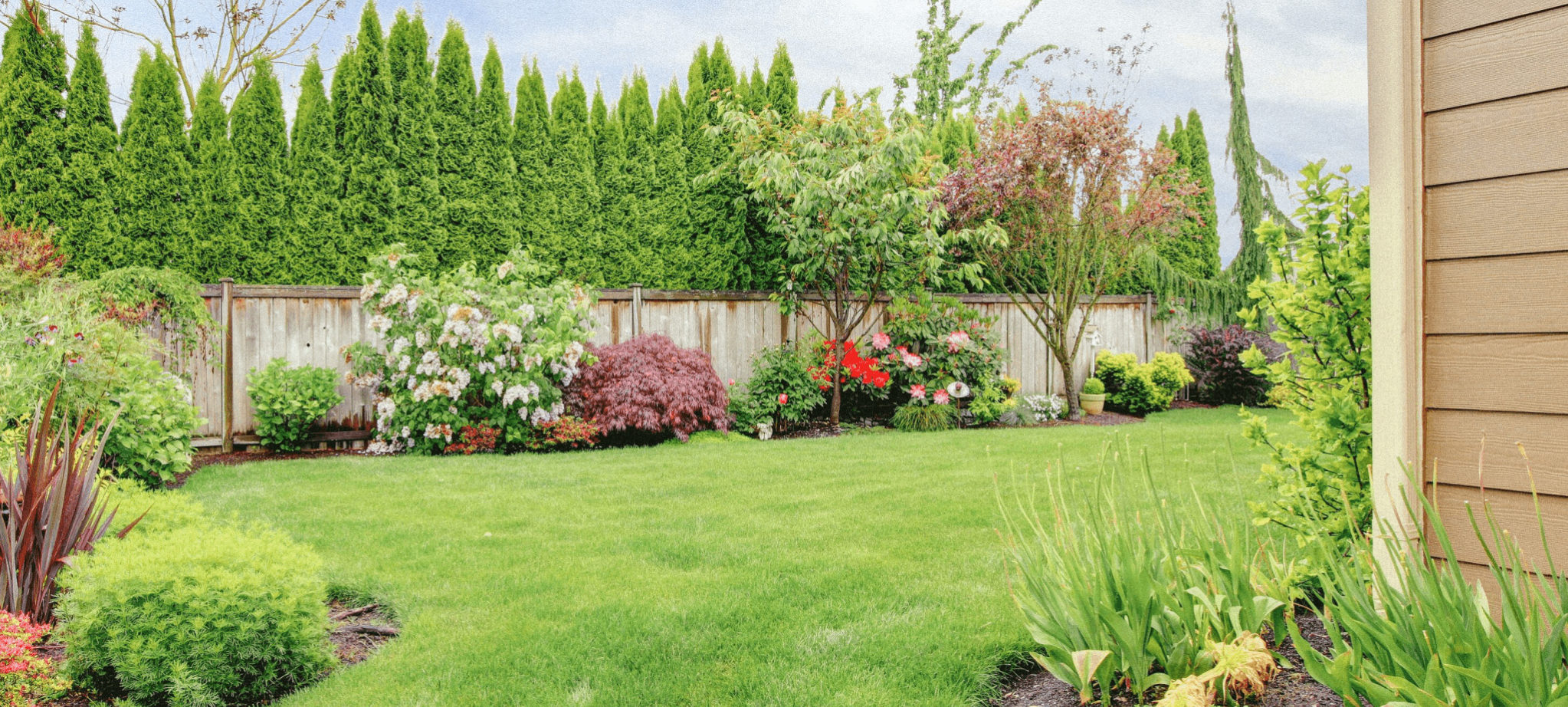 what-type-of-bushes-should-i-get-for-my-home