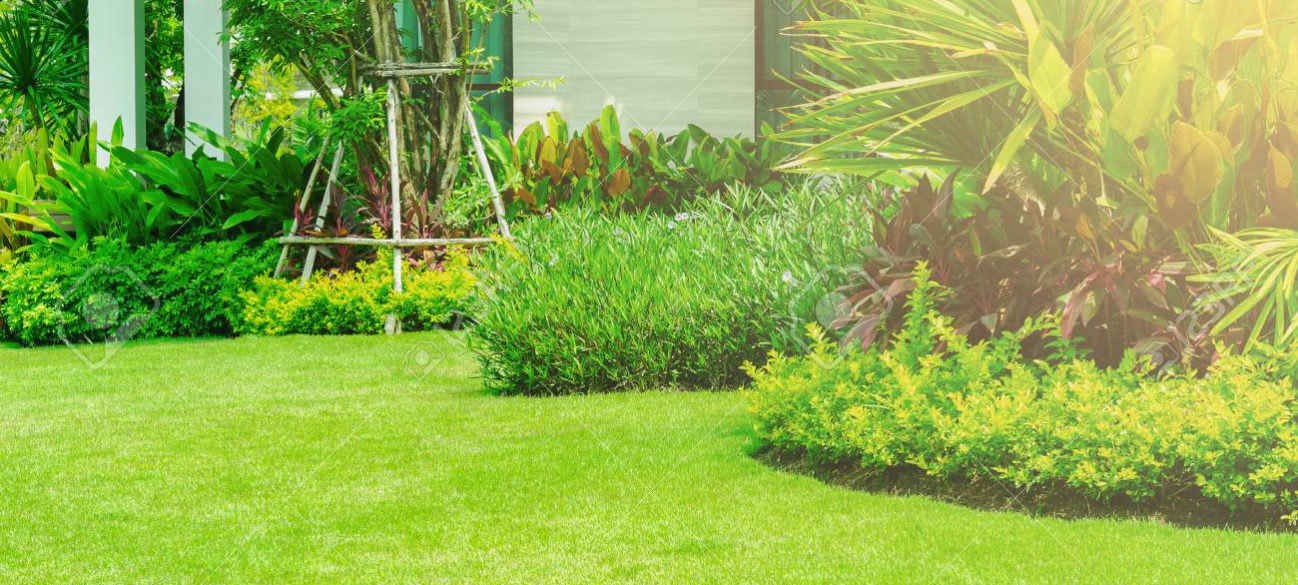what-type-of-shrubs-should-i-get-for-my-home