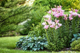 what-types-of-bushes-are-available-in-utah